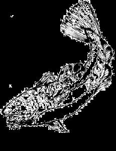 SK-fish